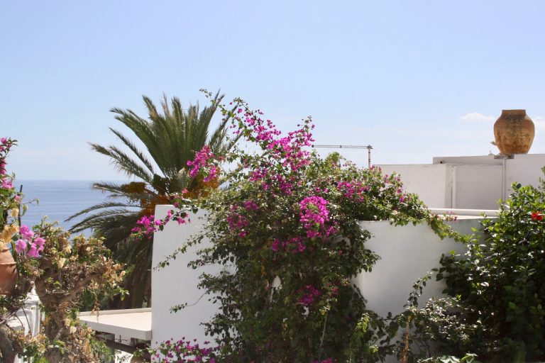 Bougainvillea and palms in Panarea